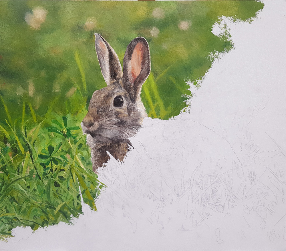 Cottontail-3
