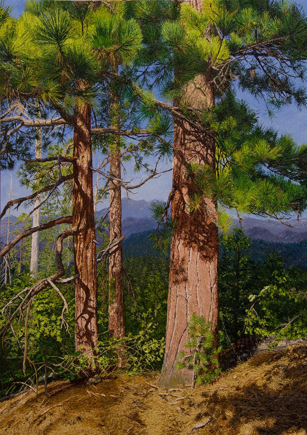 Jeffrey-Pines,-evening-light-5