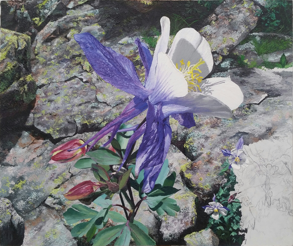 Purple-Columbine 15