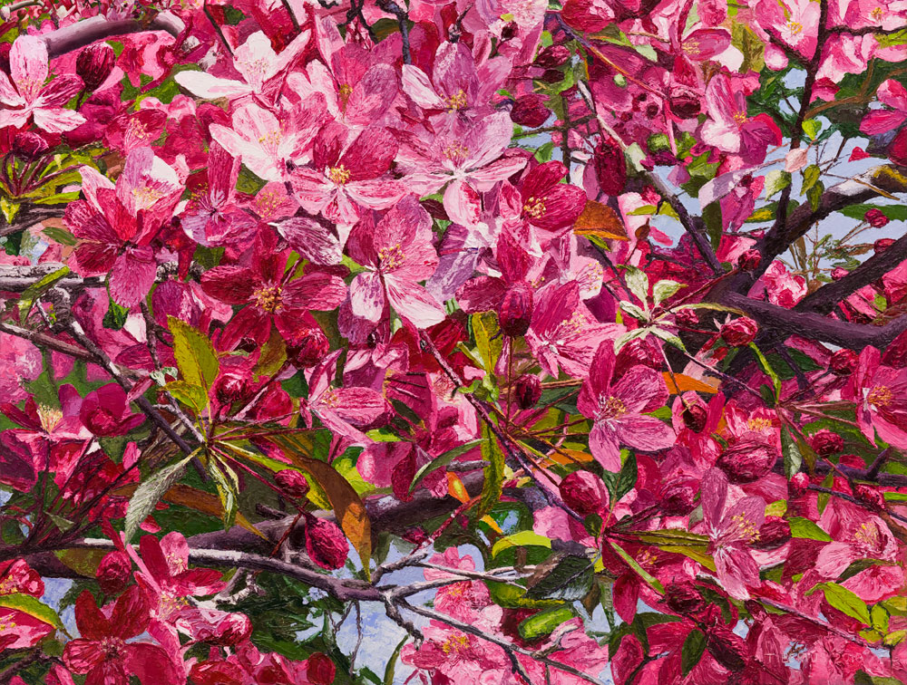 Crab-Apple-Blossoms (sold)  |  Richard G. Tiberius