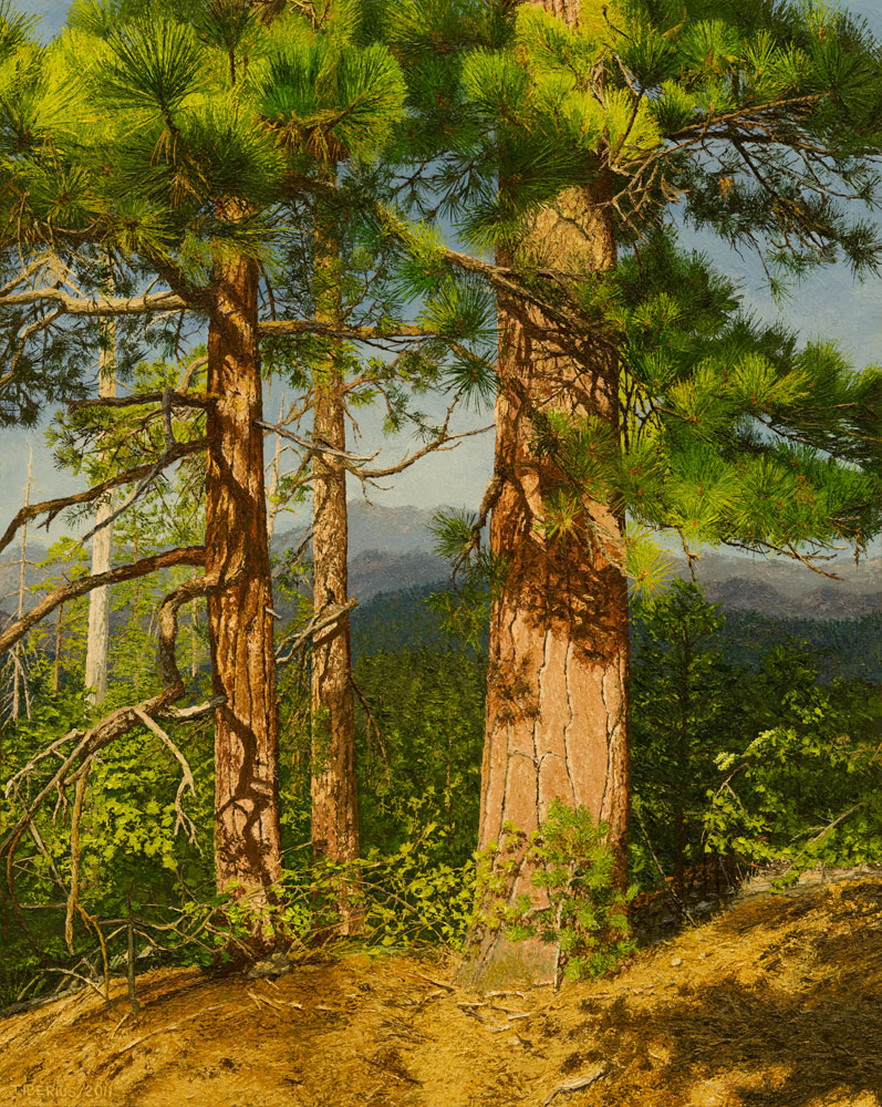 Jeffrey Pines in Evening Light (sold)  |  Richard G. Tiberius