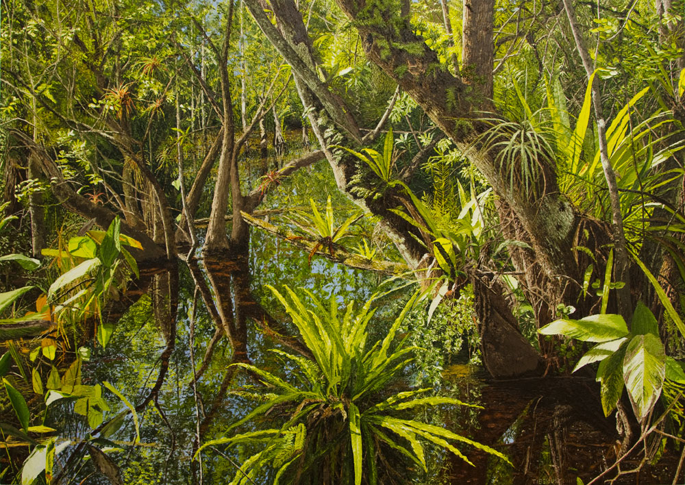 Strap Ferns on the Corkscrew River (sold)  |  Richard G. Tiberius