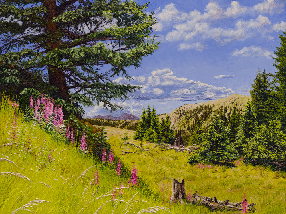 Engelmann Spruce and Fireweed  |  Richard G. Tiberius