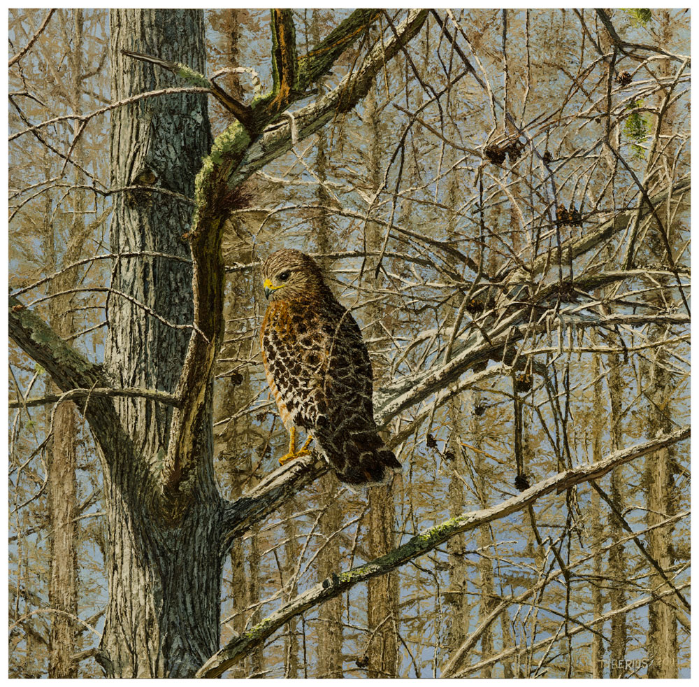 Dwarf Cypress and Red-Shouldered Hawk (sold)