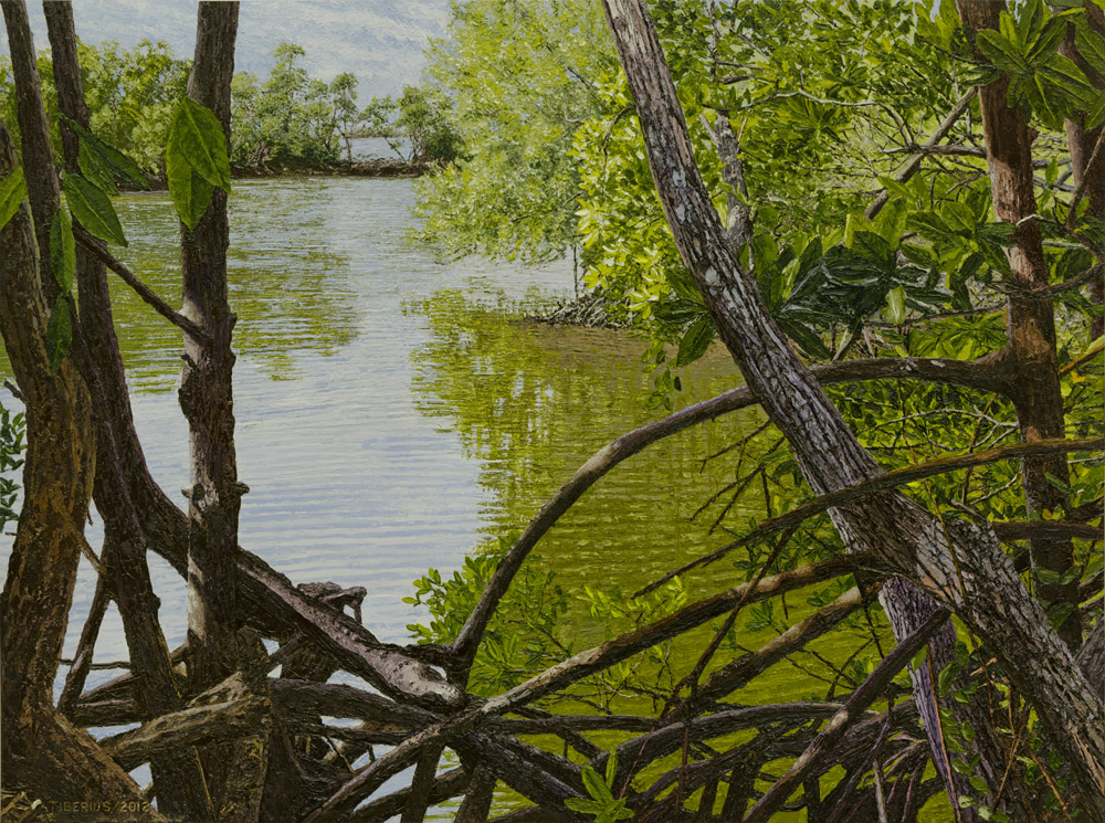 Red Mangroves  |  Richard G. Tiberius