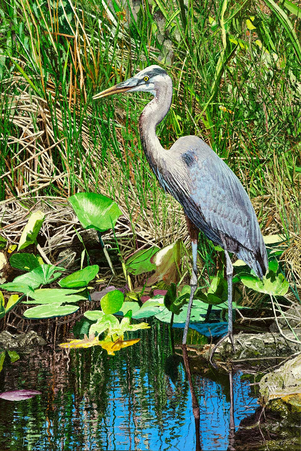 Sawgrass and Great Blue Heron (sold)  |  Richard G. Tiberius
