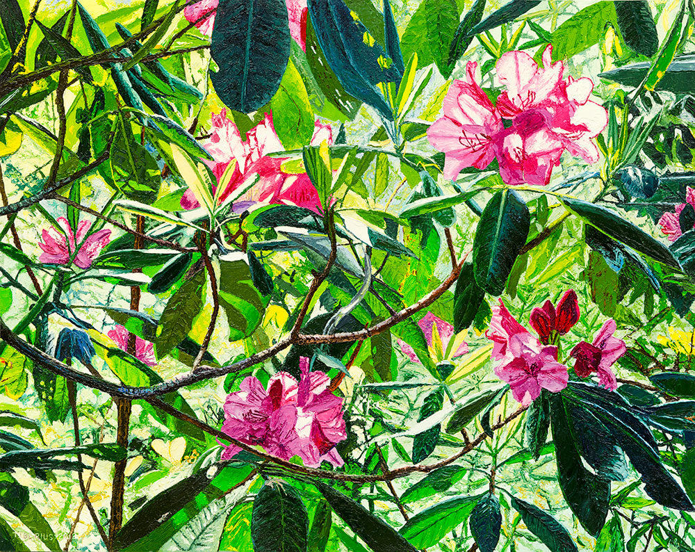 Rhododendrons Close-up     Richard G. Tiberius
