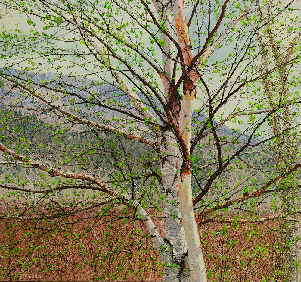 Stretching Birch (sold)  |  Richard G. Tiberius