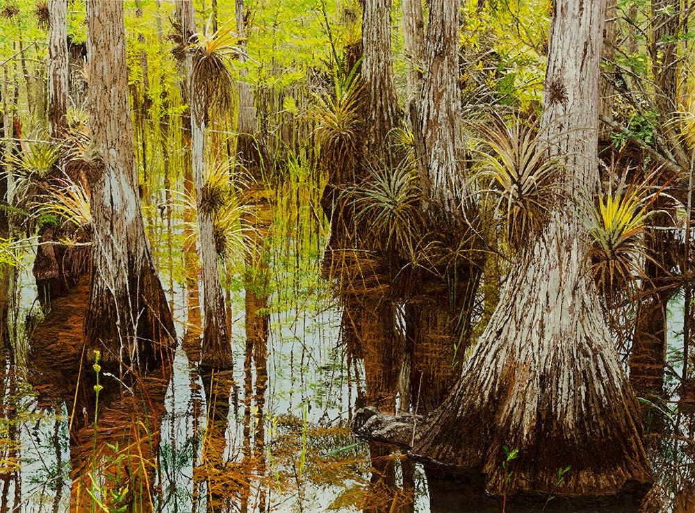 Bald Cypress with Bromeliads  |  Richard G. Tiberius