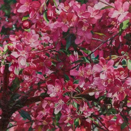 Crabapple Blossoms (sold)  |  Kiry Tiberius