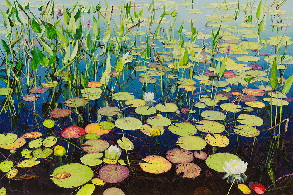 Water Lilies and Pickerel Weed – Progression
