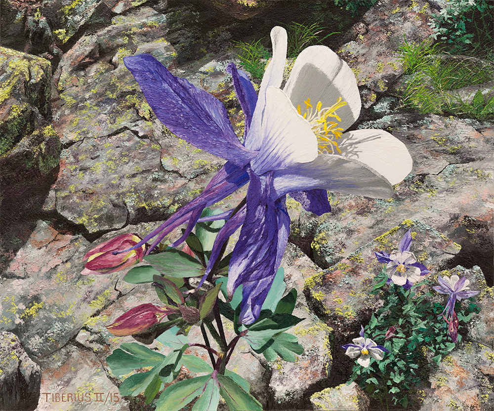 Purple Columbine (sold) | Kiry Tiberius
