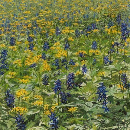 Tall Delphinium and Triangular Ragwort | Richard G. Tiberius