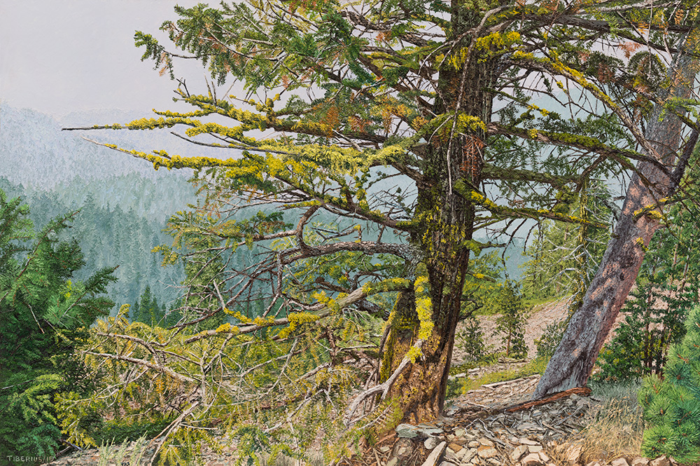 Engelmann Spruce in Yellowstone National Park (sold) | Richard G. Tiberius