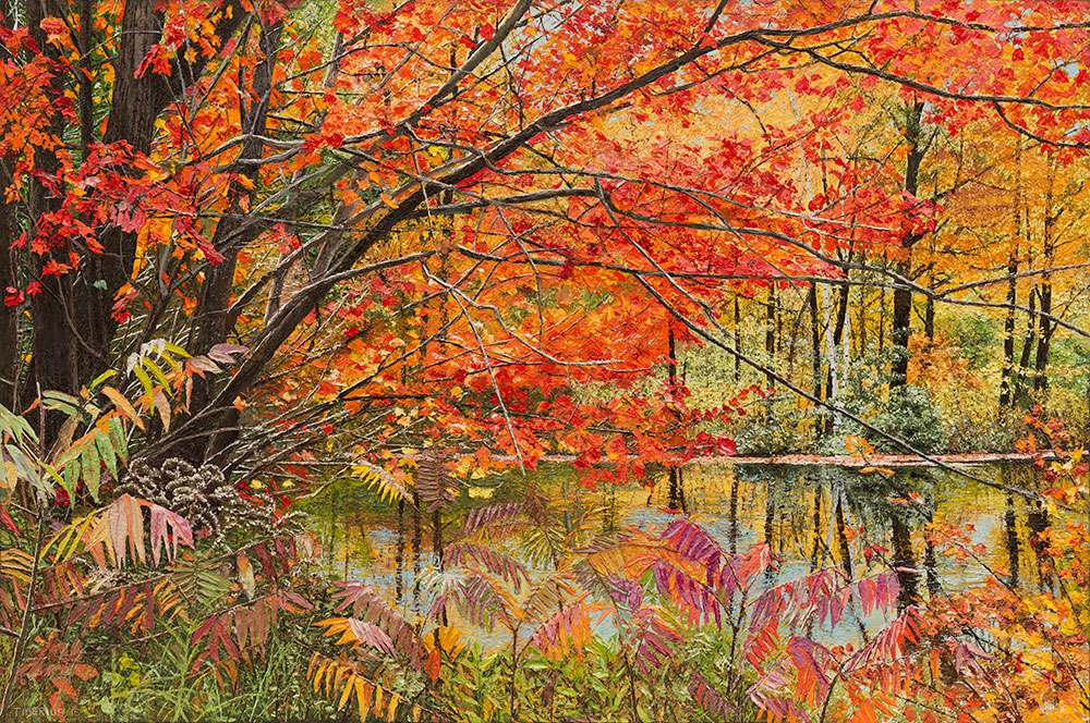 Red Maple and Sumac in Fall