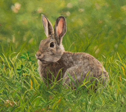 Cottontail in Evening Light (sold) | Kiry Tiberius