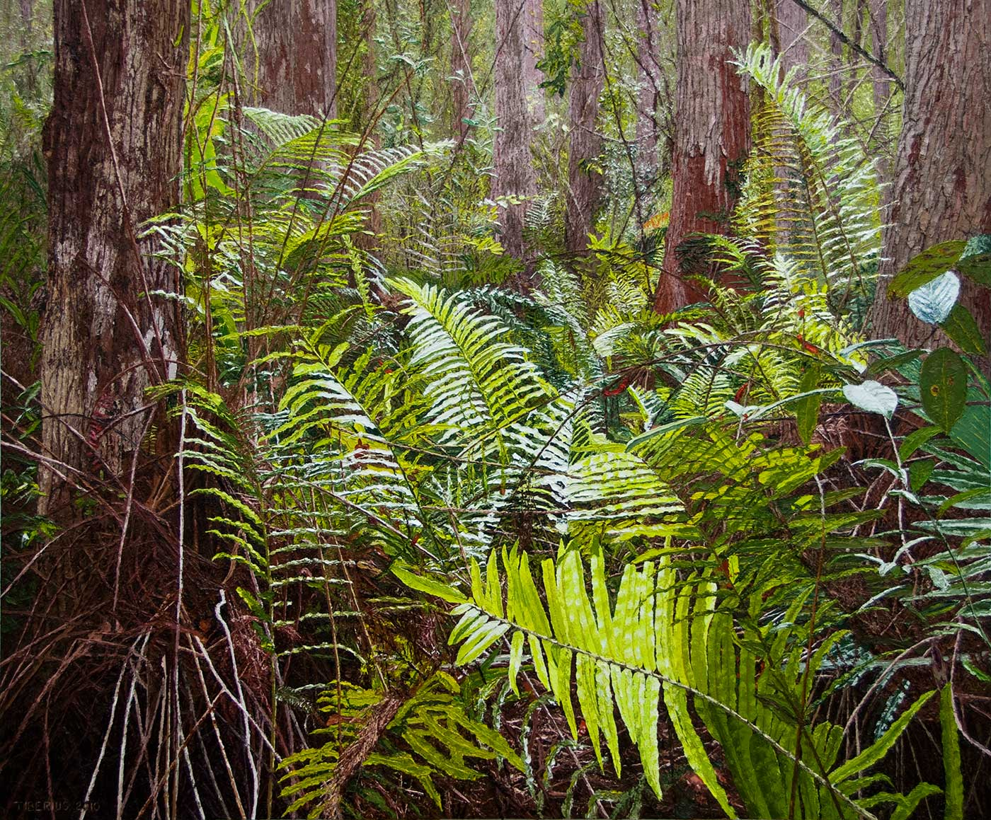 Ferns among the Cypress Trees – Progression