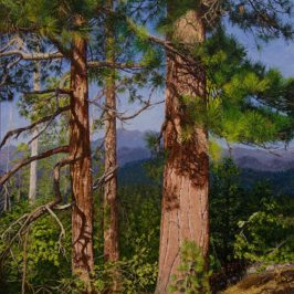 Jeffrey Pines, Evening Light – Progression
