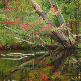 Old Red Maple on River Bank – Progression