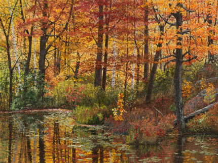 Maples at the Edge of a Pond