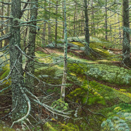 Spruce Forest in Acadia National Park | Richard G. Tiberius
