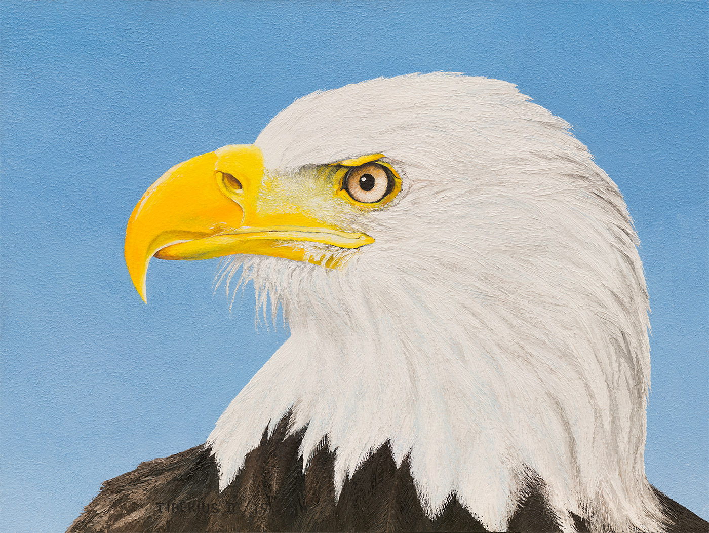 Bald Eagle | Kiry Tiberius