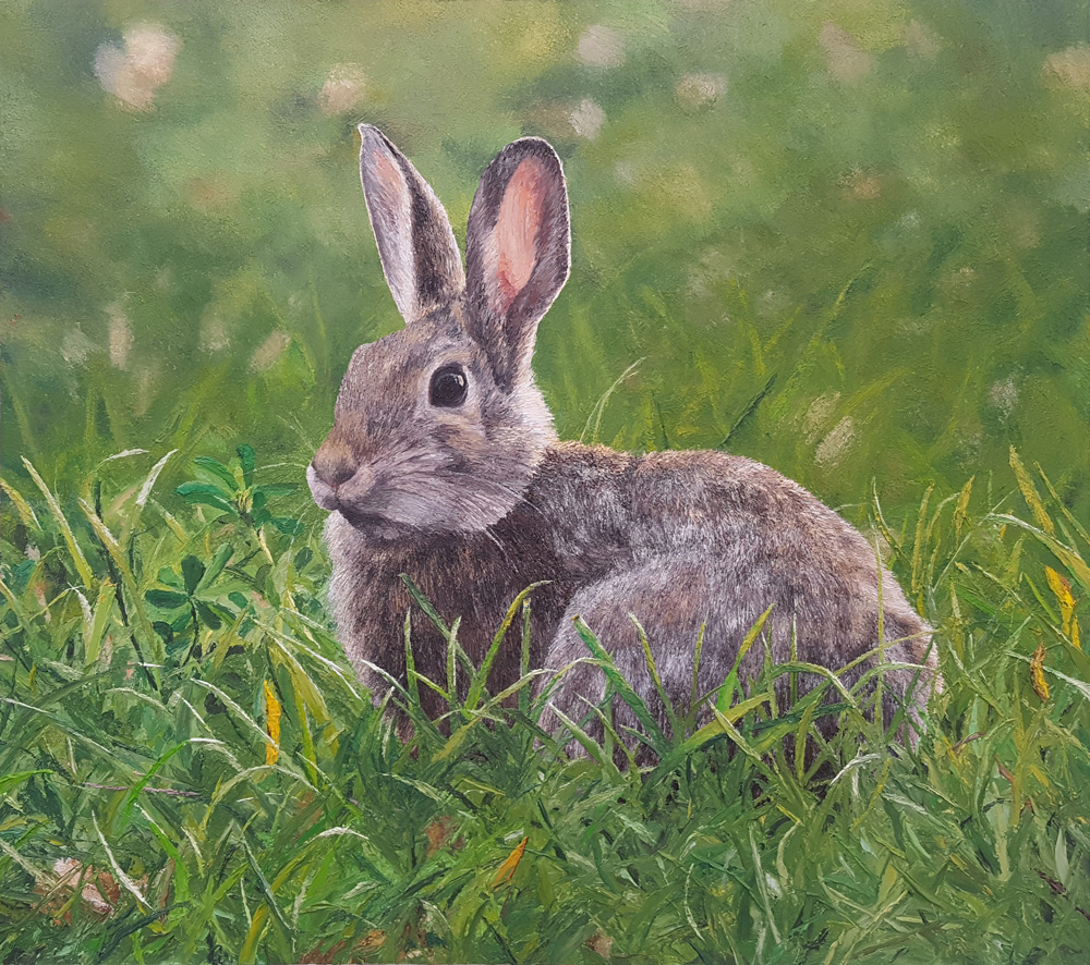 Cottontail in Evening Light – Progression